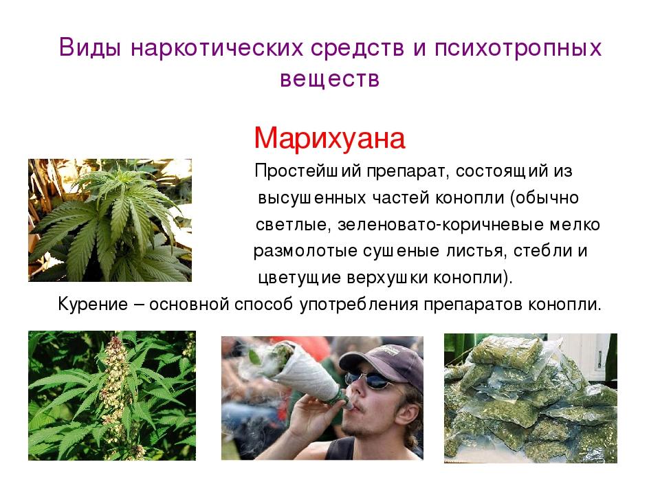 Марихуаны группа наркотиков семя конопли клонировать