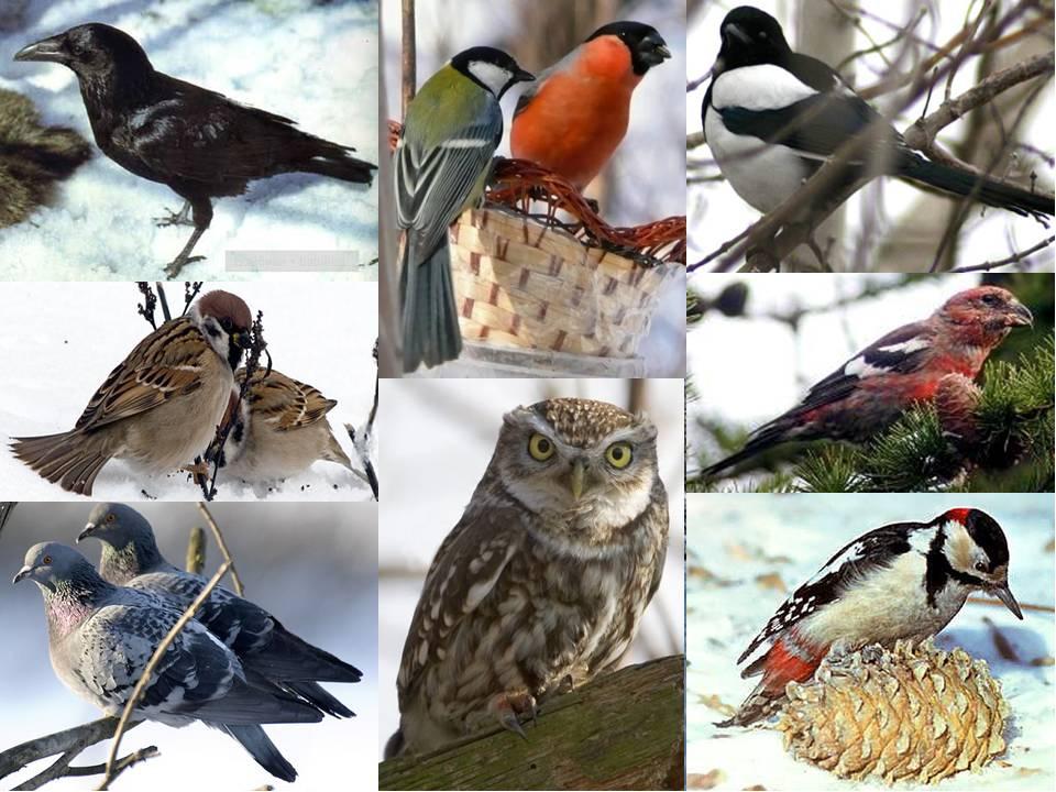 Птицы россии картинки для детей, цветами