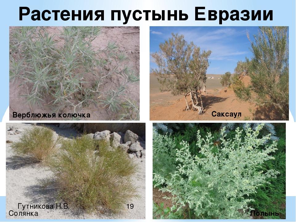 все ваши растения евразии фото с названиями надевают