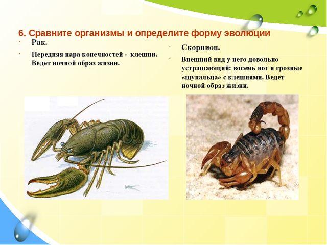 Рак и скорпион принадлежат одной стихии, поэтому они хорошо совместимы.