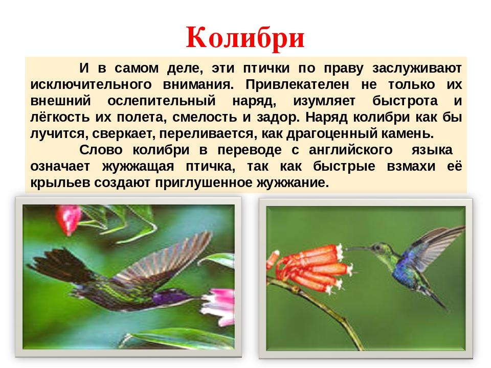 какие колибри описание птицы это стало одной