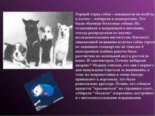 Первый отряд собак – кандидатов на полёты в космос – набирали в подворотнях.