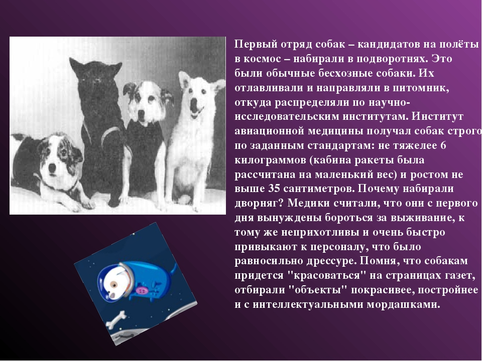 Первый отряд собак – кандидатов на полёты в космос – набирали в подворотнях....