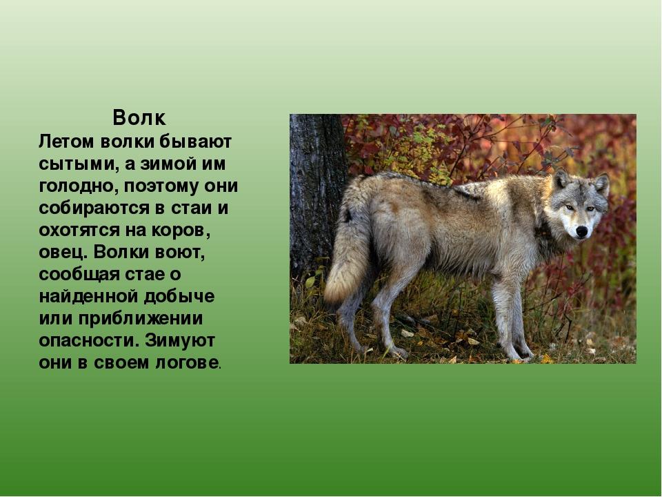 животные с картинками в татарстане