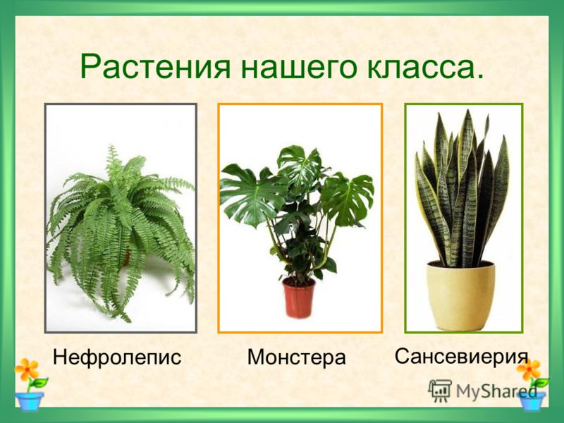 Конспект урока по окруж миру 2класс комнатные растения