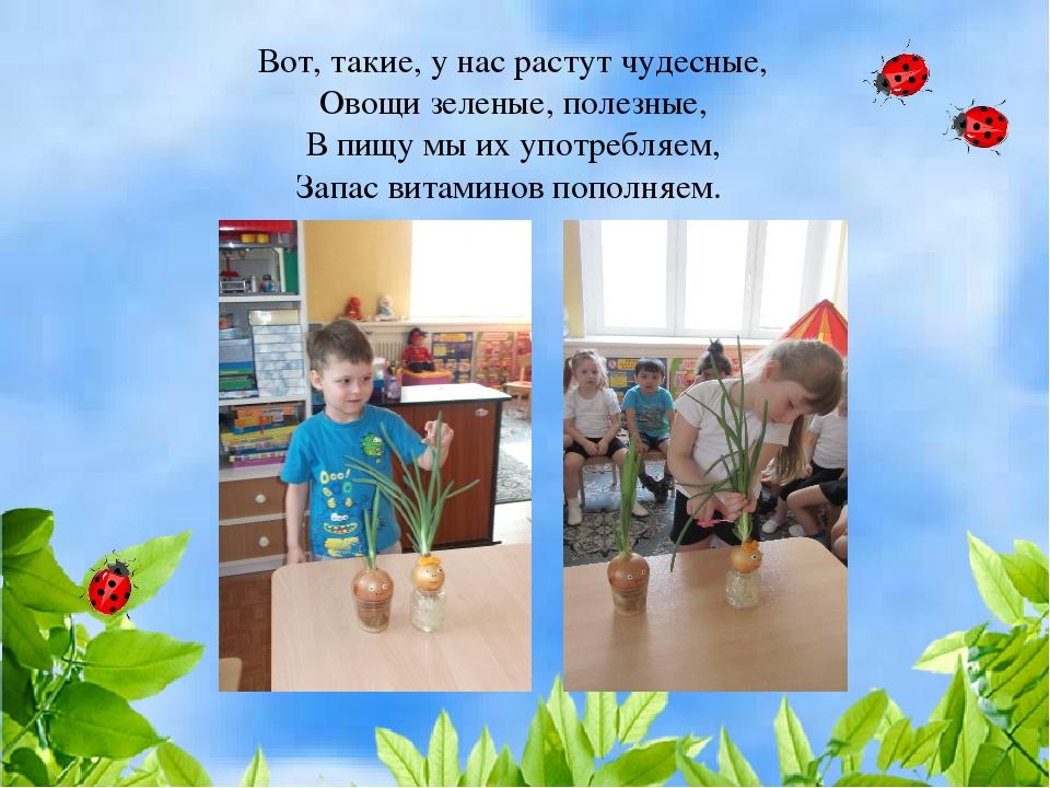 Вот, такие, у нас растут чудесные, Овощи зеленые, полезные, В пищу мы их упот...