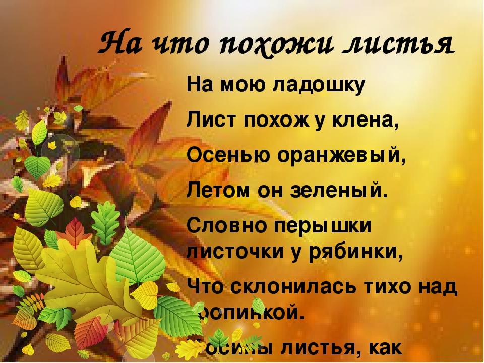 На что похожи листья На мою ладошку Лист похож у клена, Осенью оранжевый, Лет...