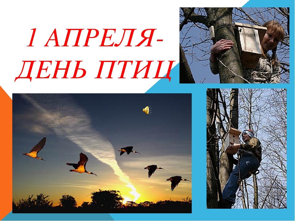 протекания картинки к 1 апреля день птиц создать проект
