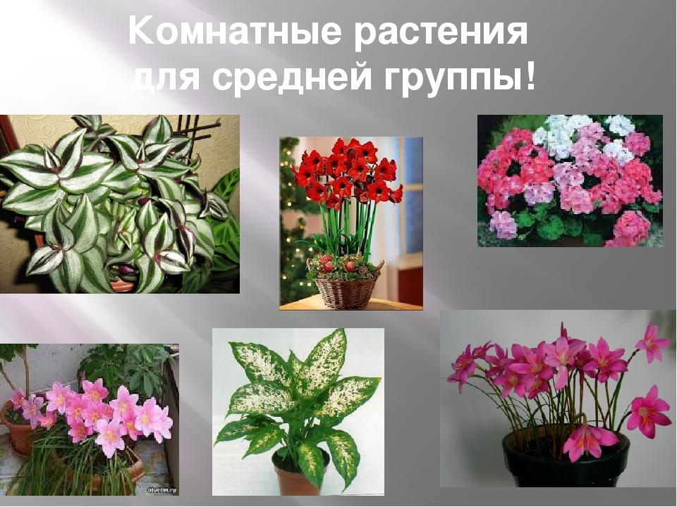 картинки комнатных цветов с названиями для подготовительной группы сама женя