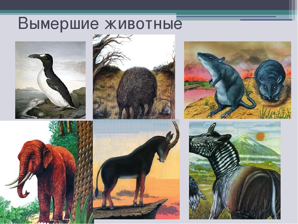 Исчезнувшие животные картинки с названиями
