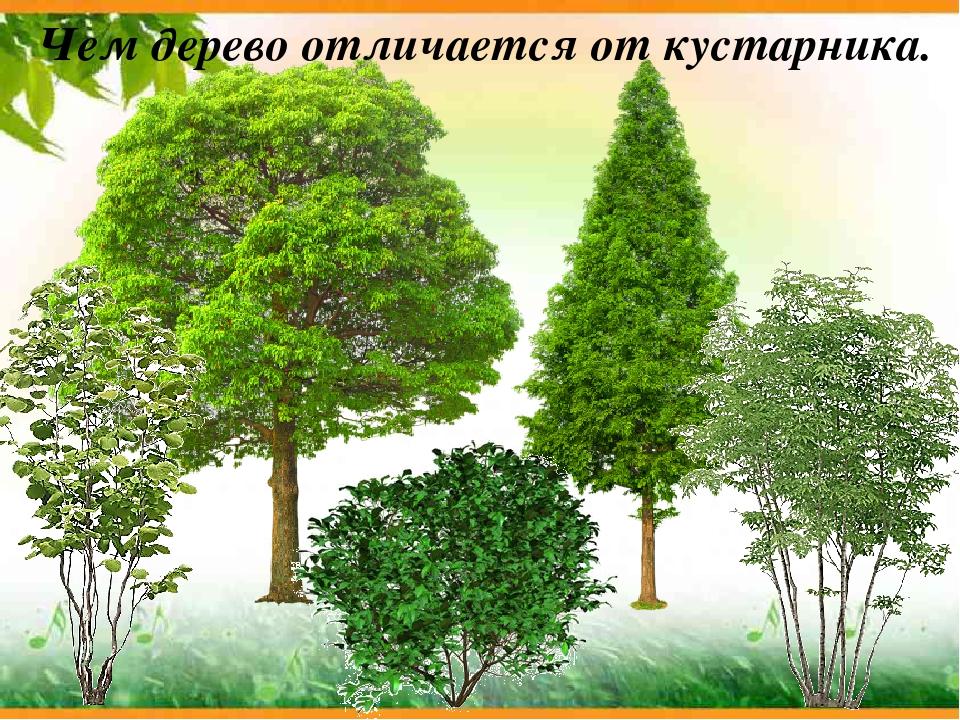 применение картинки для презентации деревья и кустарники людям вещам