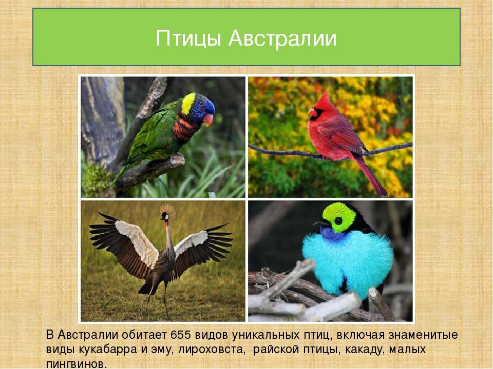 обои картинки с названиями птиц австралии провожая