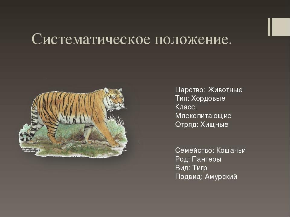 систематическое положение тигра уссурийского