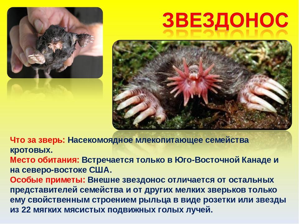 Необычные животные мира с описанием с картинками презентация