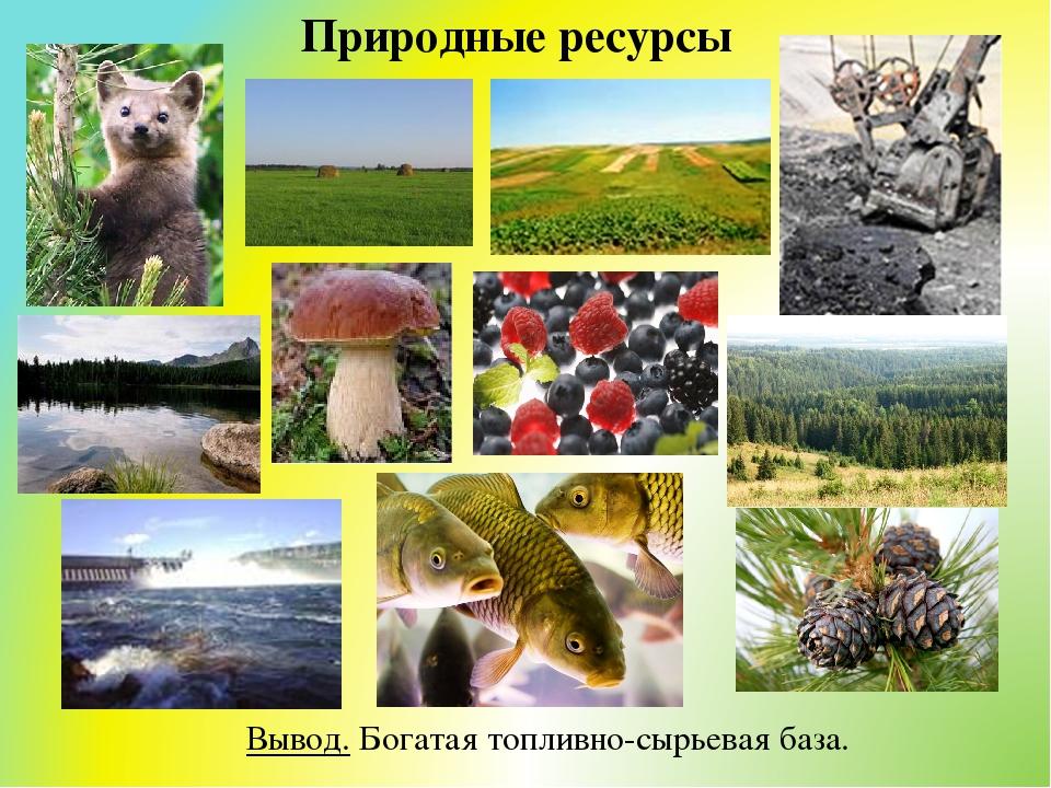 природные ресурсы с картинками встреча заставляет провинциального