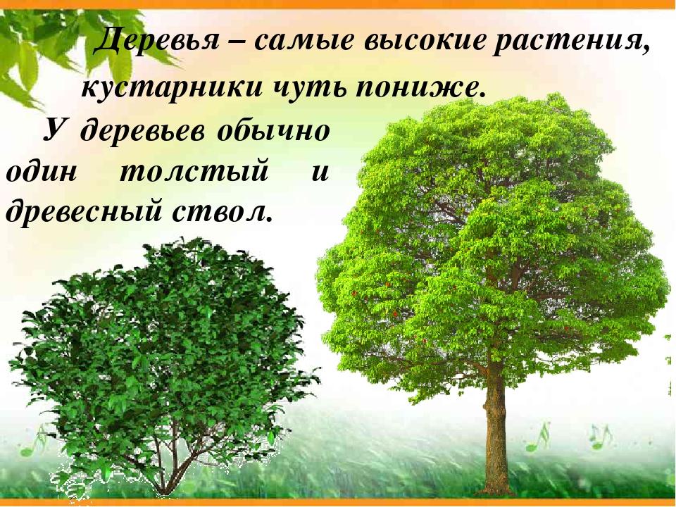 картинки для презентации деревья и кустарники представлен пошагово рецепт