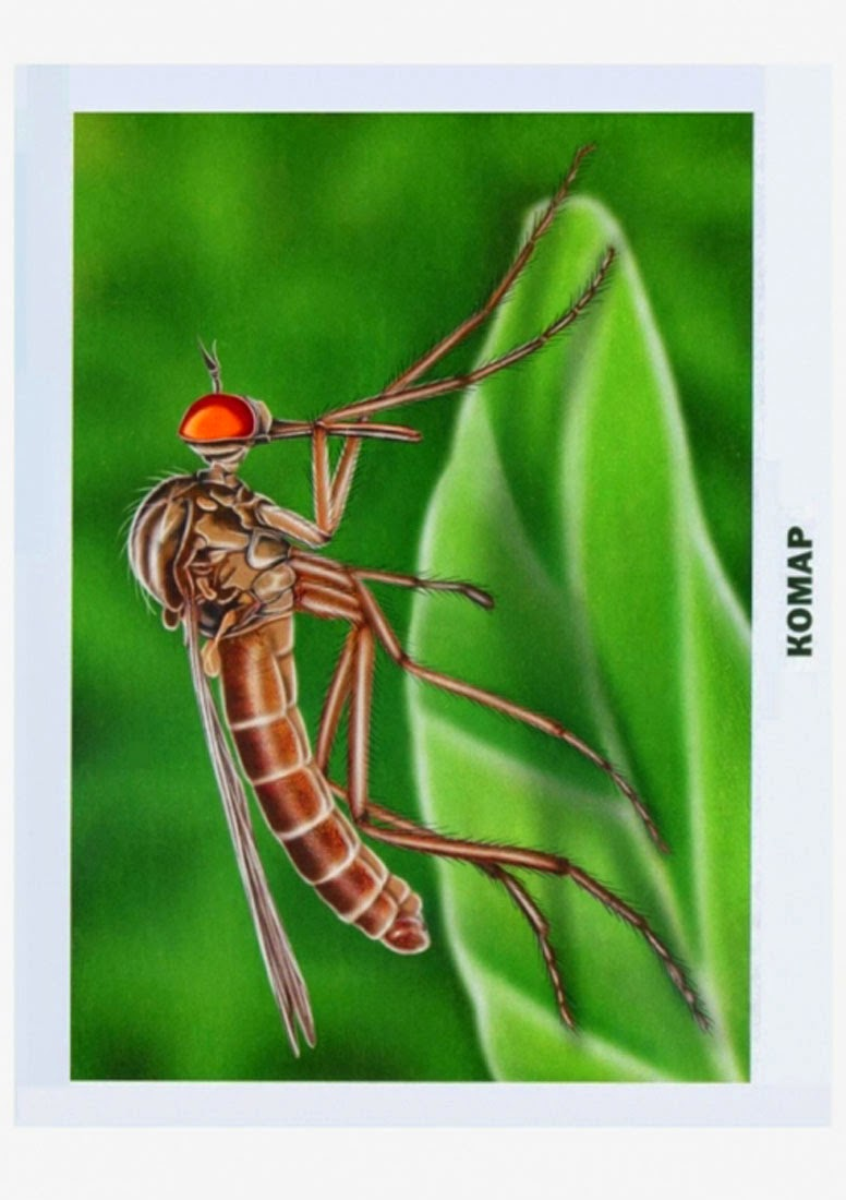 таким картинка комара и жука можно просто возвести