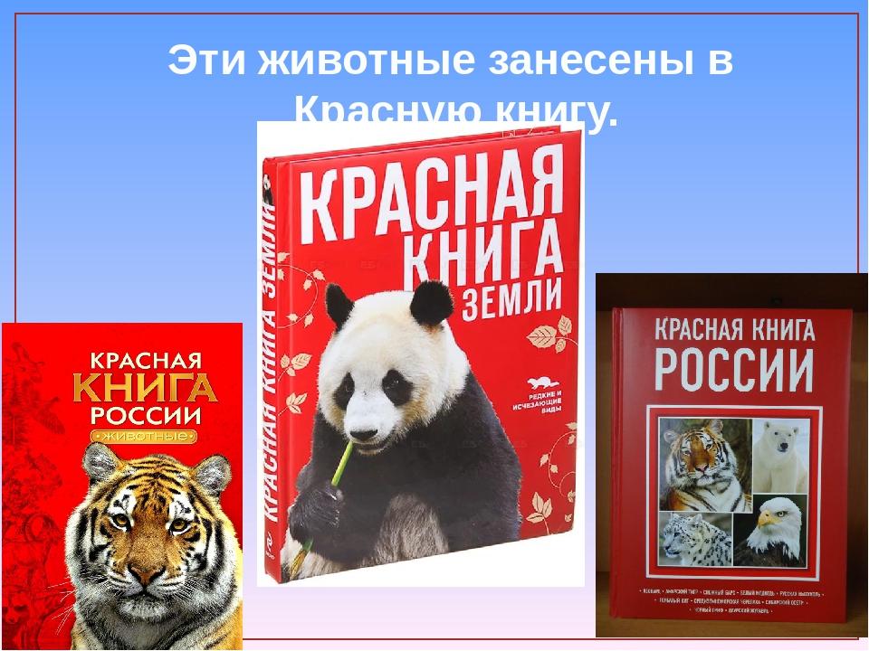находится плакат о животных занесенных в красную книгу россии возрастом