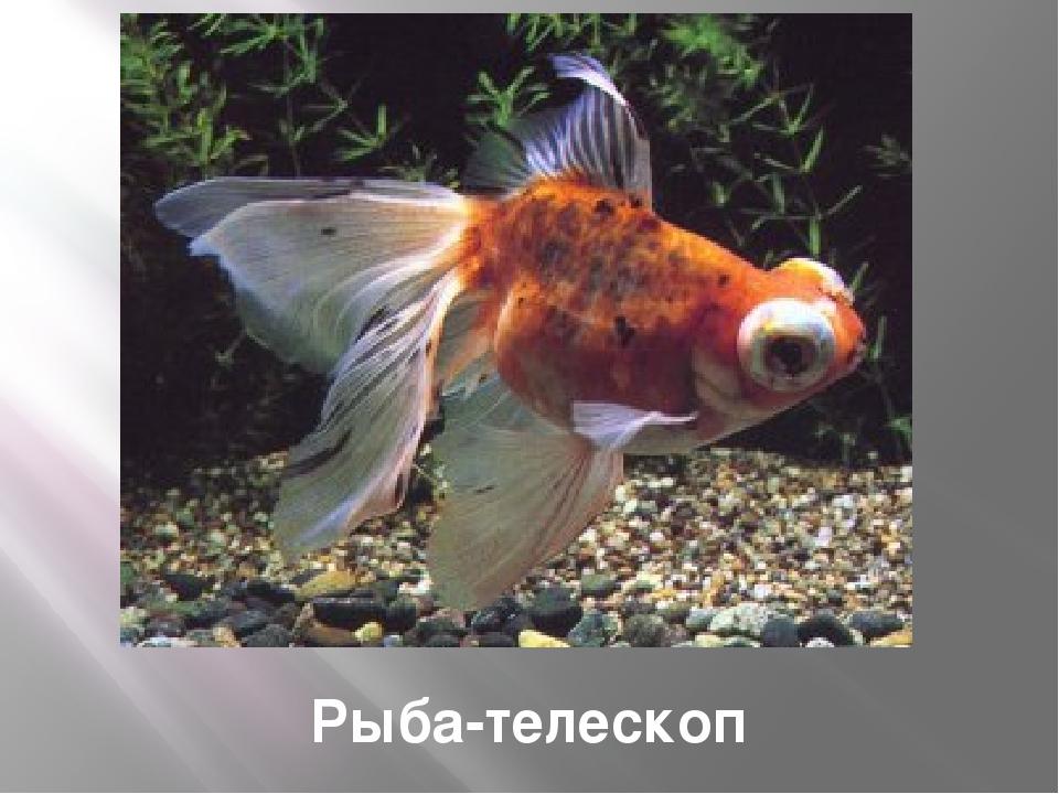 Расписной кузовок Interbaby: boxfish