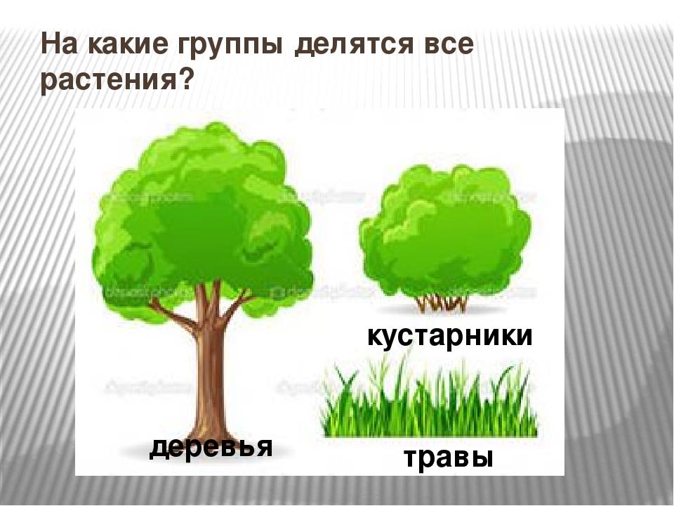 картинки групп растений деревья кустарники и травы труба говорит нам