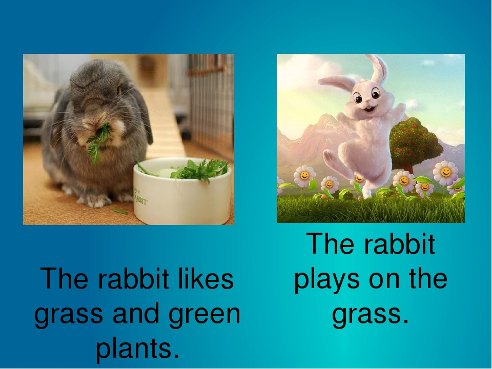 The rabbit likes grass and green plants. The rabbit plays on the grass.