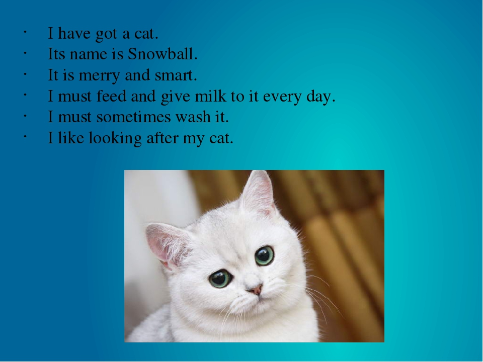 I have got a cat. Its name is Snowball. It is merry and smart. I must feed an...