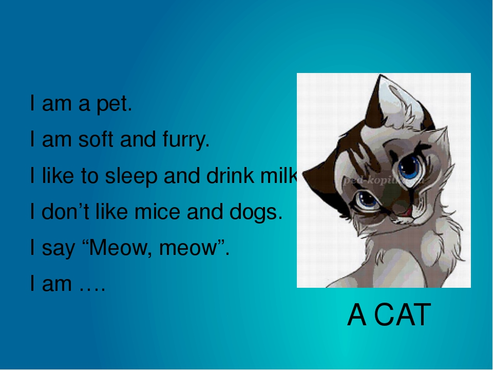 A CAT I am a pet. I am soft and furry. I like to sleep and drink milk. I don'...
