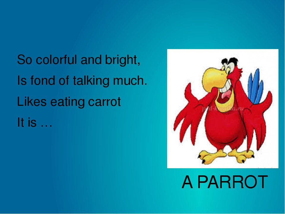 A PARROT So colorful and bright,  Is fond of talking much.  Likes eating carr...
