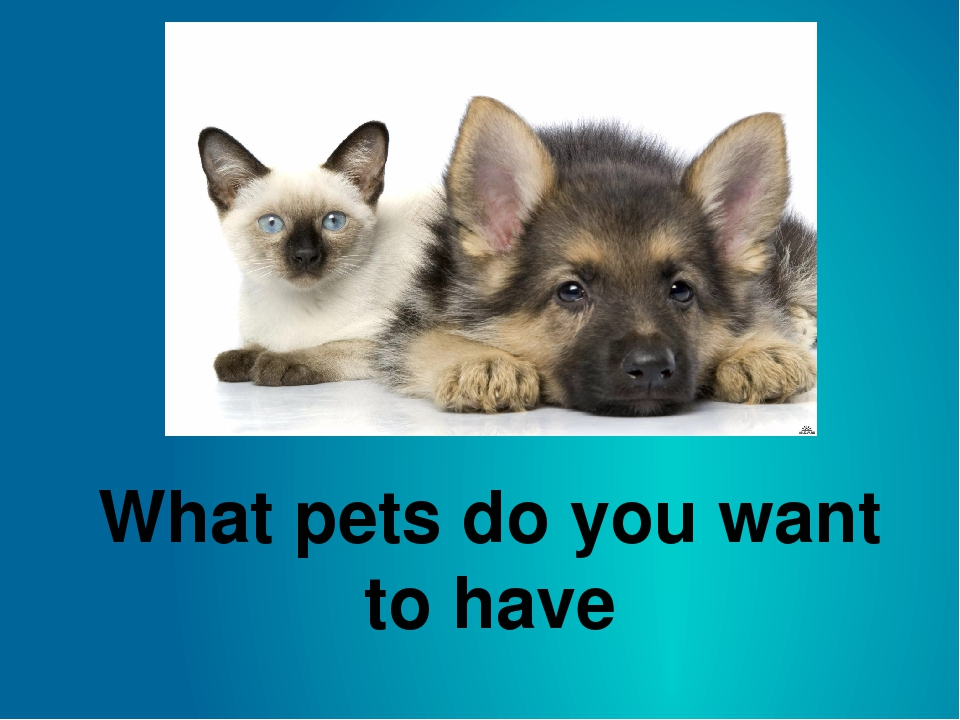 What pets do you want to have