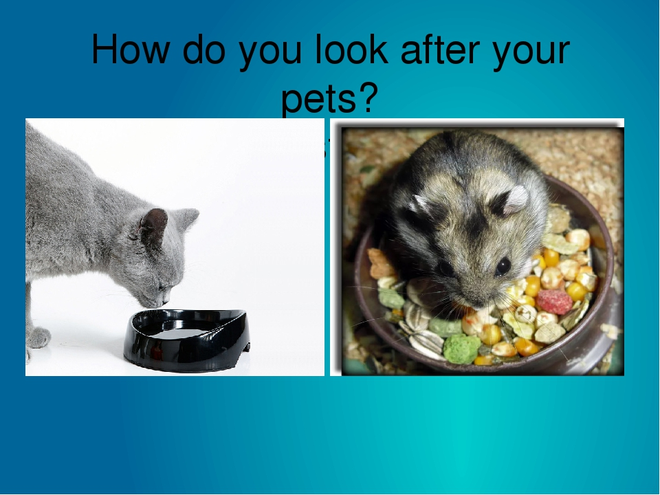 How do you look after your pets? I must ……
