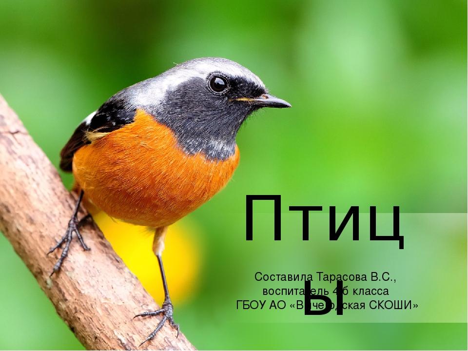 Птицы Составила Тарасова В.С., воспитатель 4 б класса ГБОУ АО «Вычегодская СК...