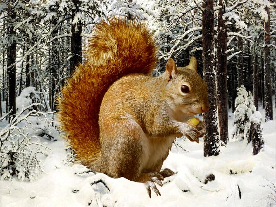 картинки животных в зимнее время года таинственное очень красивое