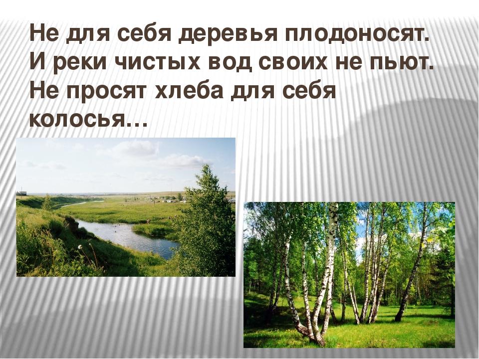 Не для себя деревья плодоносят. И реки чистых вод своих не пьют. Не просят хл...