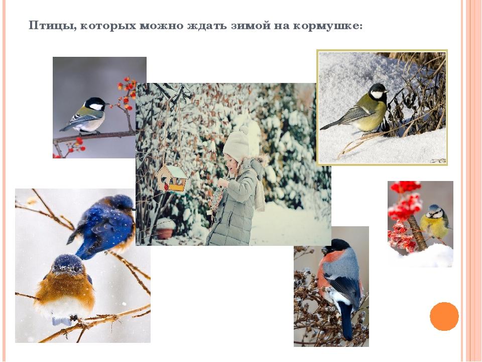 Птицы, которых можно ждать зимой на кормушке: