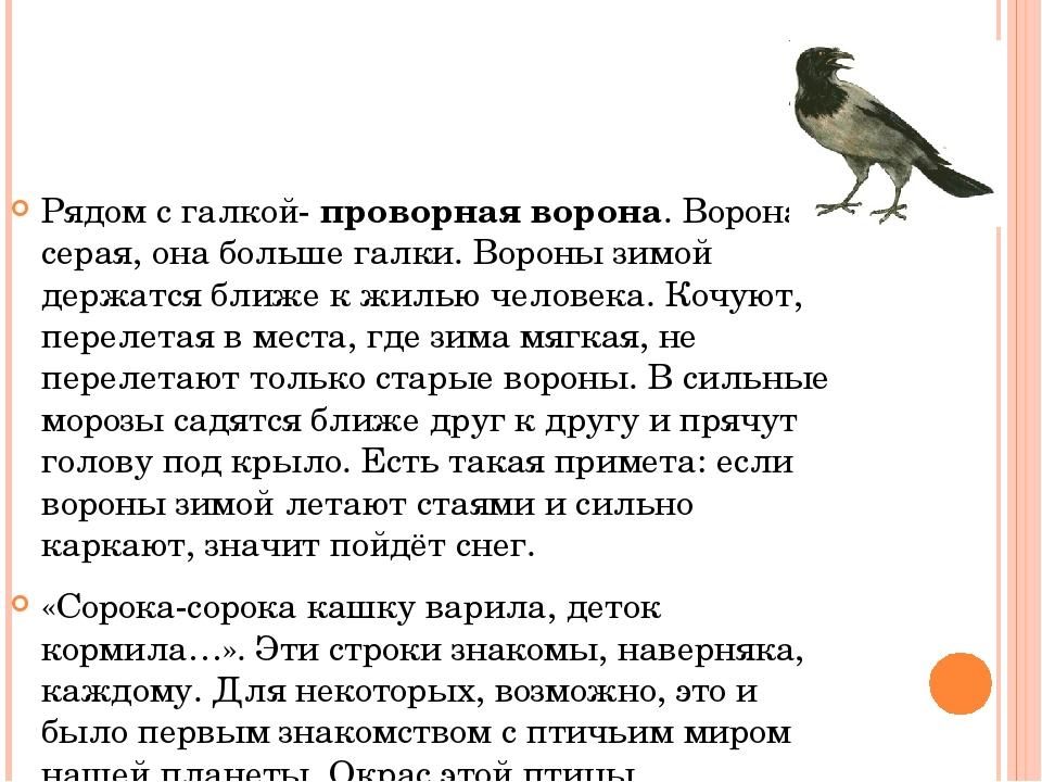 Рядом с галкой- проворная ворона. Ворона серая, она больше галки. Вороны зимо...