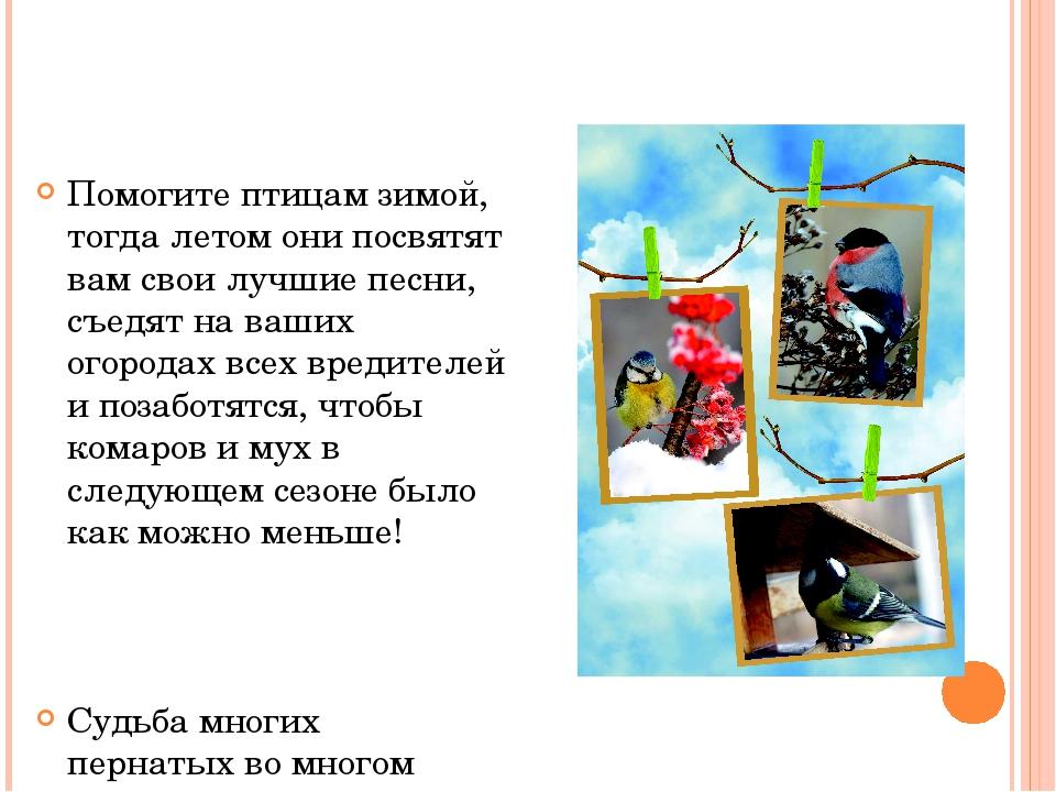 Помогите птицам зимой, тогда летом они посвятят вам свои лучшие песни, съедят...