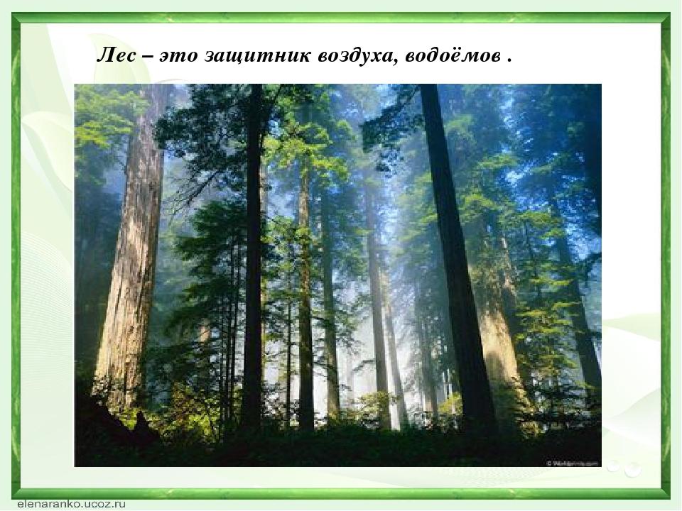 Лес – это защитник воздуха, водоёмов .