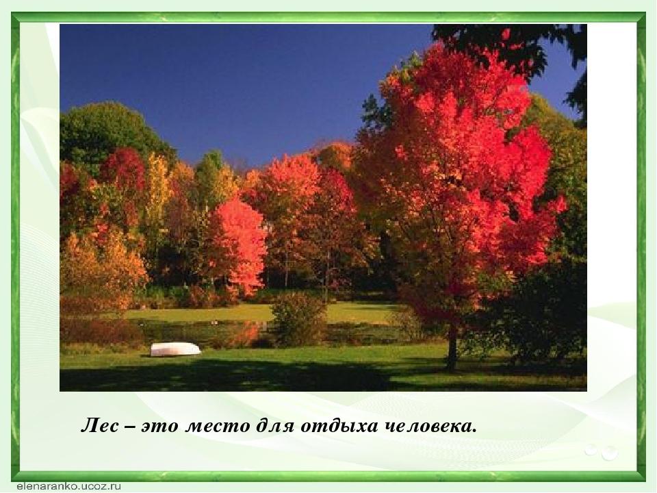Лес – это место для отдыха человека.