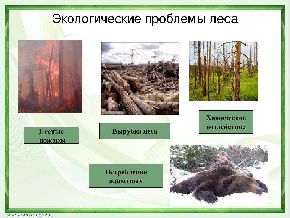 Экологические проблемы леса Лесные пожары Вырубка леса Химическое воздействие...