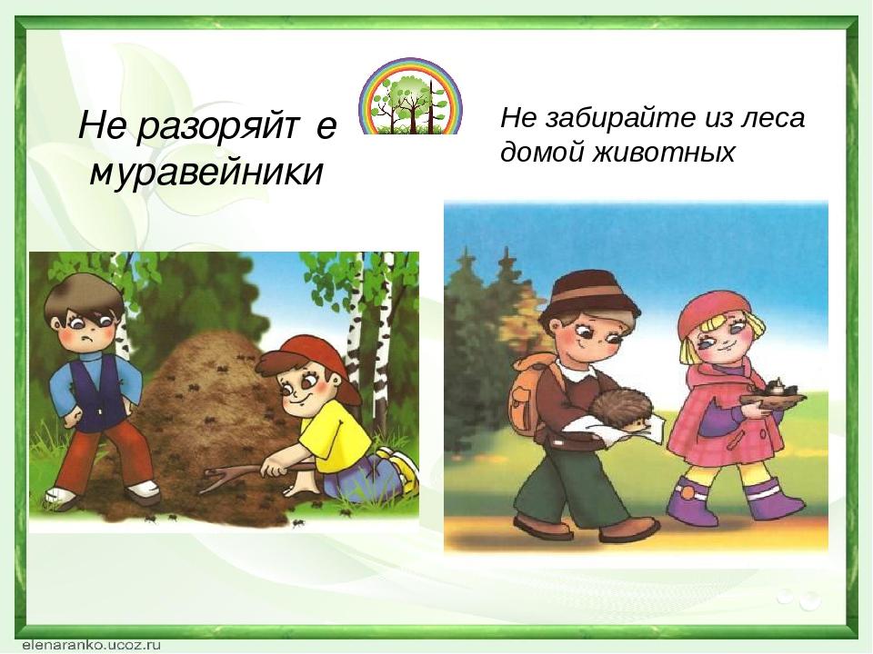 Не разоряйте муравейники Не забирайте из леса домой животных
