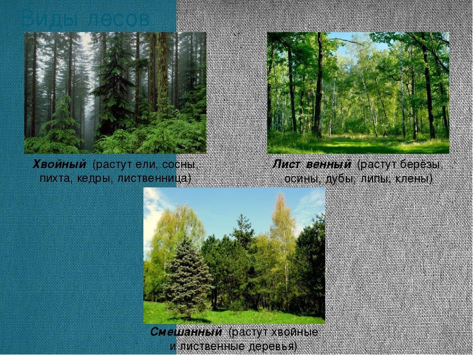 Виды лесов Хвойный (растут ели, сосны, пихта, кедры, лиственница) Смешанный (...