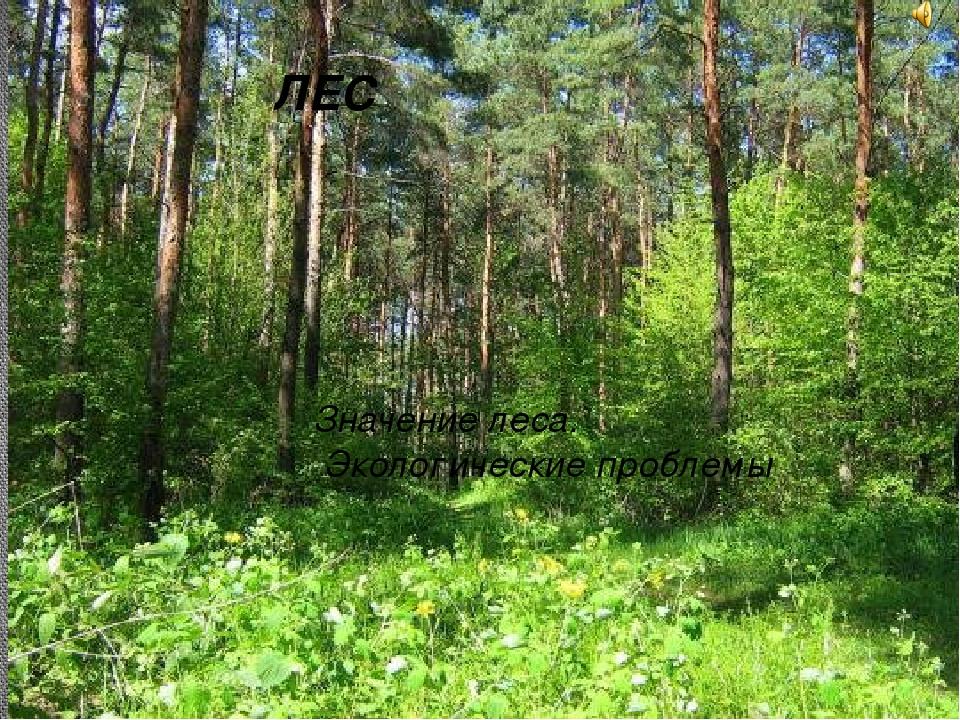 ЛЕС Значение леса. Экологические проблемы