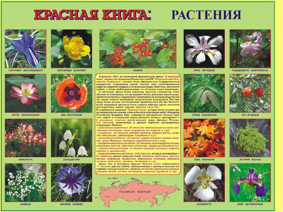 список всех растений мира по алфавиту названиях