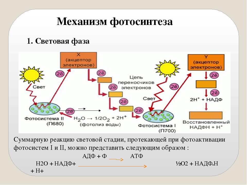 солнышко согревает фотосинтез кратко и понятно обои универсальный