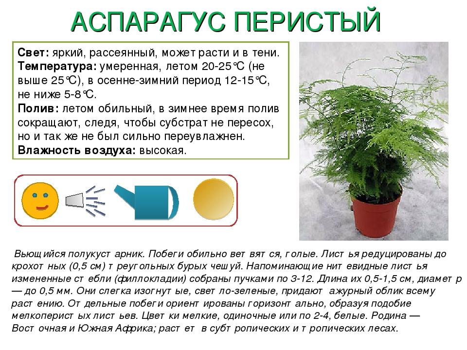 конструкции картотека комнатных растений в картинках других фоток