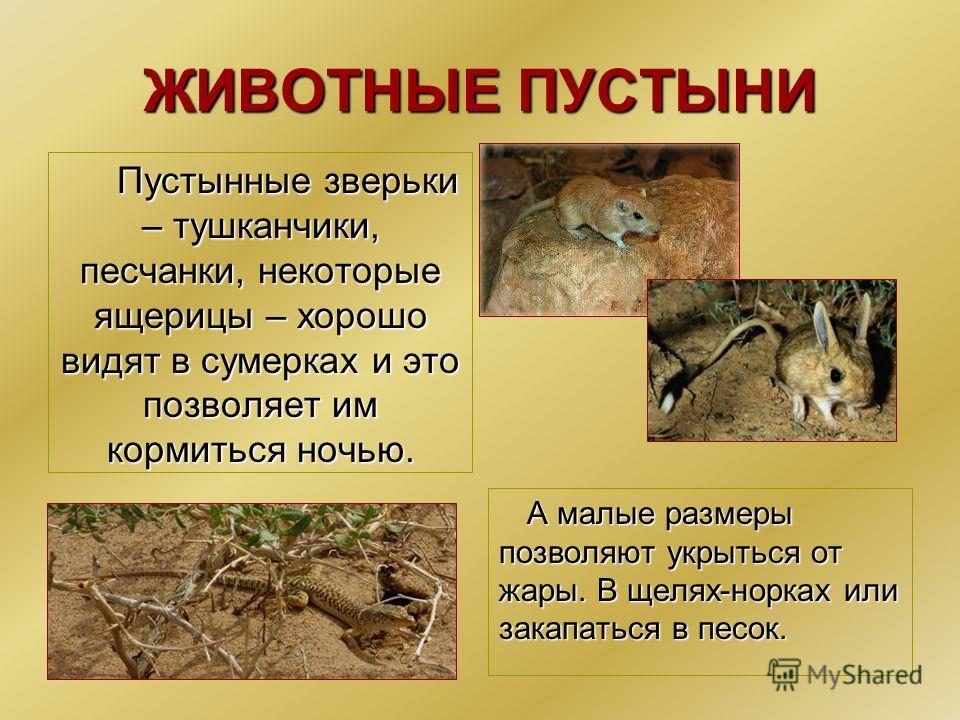 животные пустыни описание с картинками вирішили завезти висадити