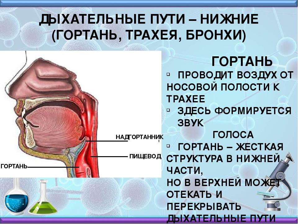 Способы лечения трахеита