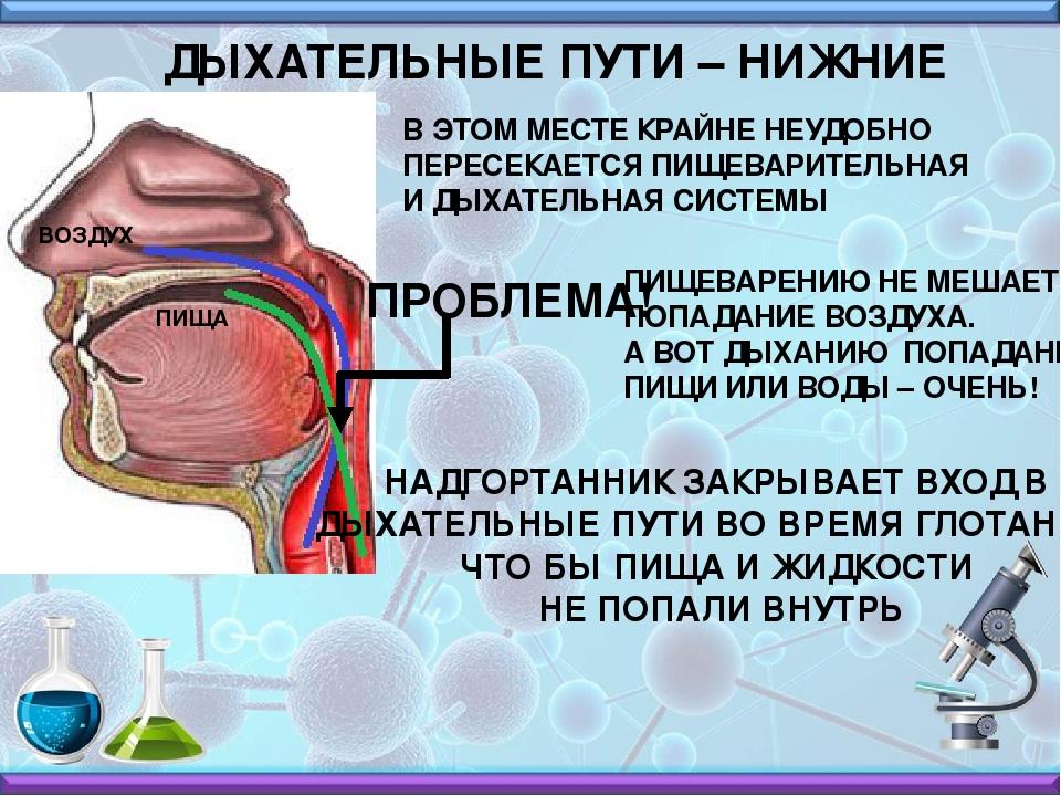 Почему воздух попадает в желудок