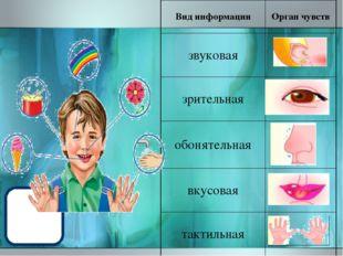 Вид информации Орган чувств звуковая зрительная обонятельная вкусовая тактиль