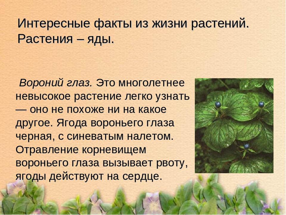 Растительные яды любопытно порно
